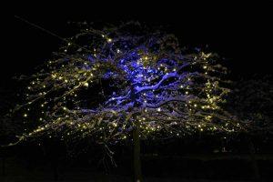 Feestverlichting in boom met sneeuw