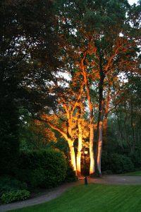 Grondspot boom verlichting diepe tuin