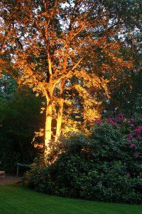 Tuinverlichting boom diepe tuin